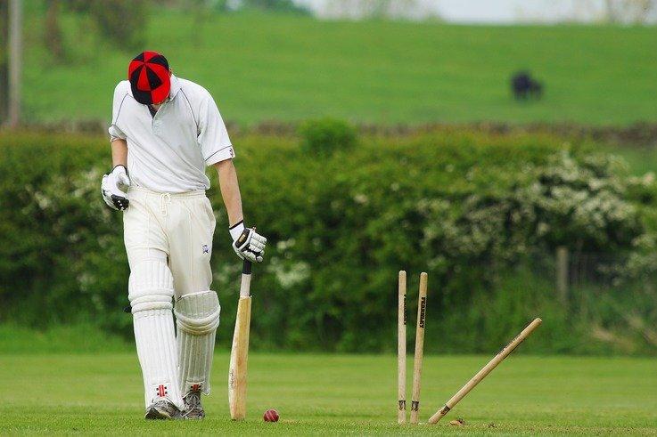 cricket-724616_1920.jpg
