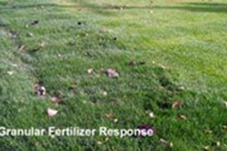Using granular or liquid fertilisers
