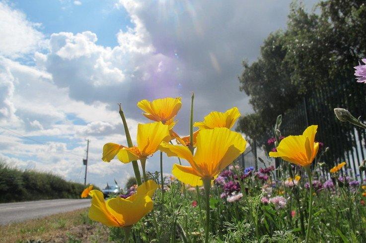wildflower als