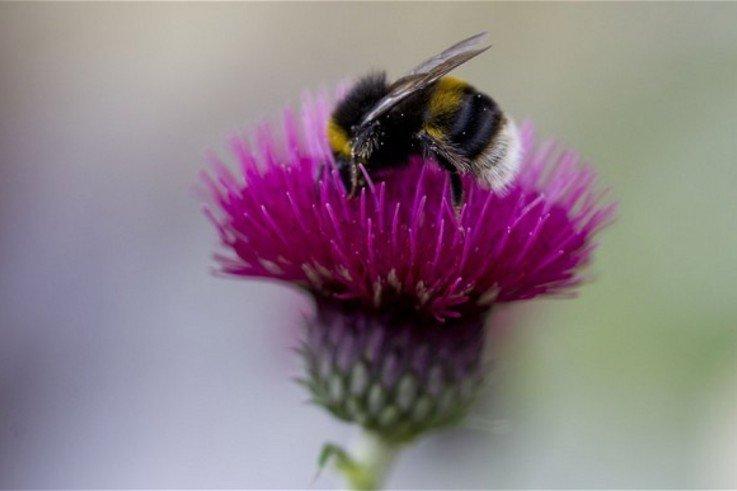 chelsea flower bee 2916684b