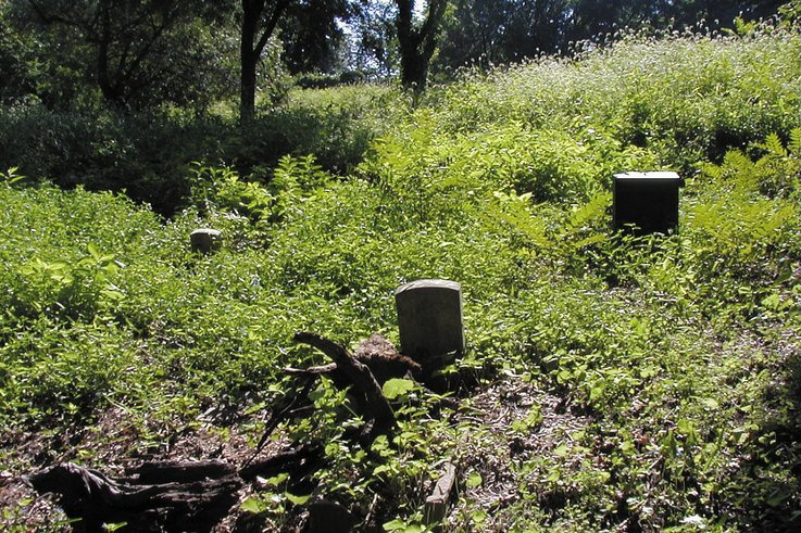 Weed control - a grave issue ...