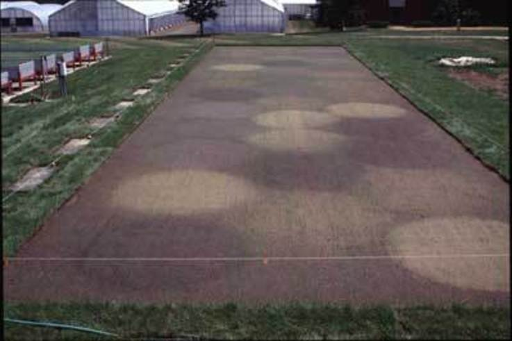 Putting Green Root Zone Amendments and Irrigation Water Conservation