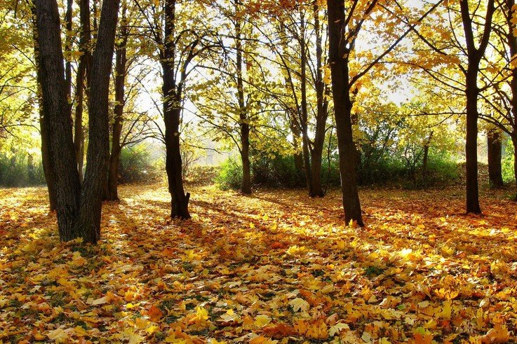 Trees Autumn season Leaves Fallen Leaves Fresh New Hd Wallpaper