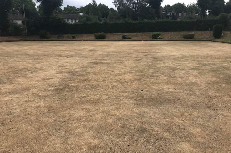 "Drought stressed turf: ""It will come back…...won't it?"""