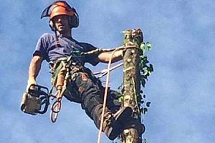 Tree surgeon dead 1