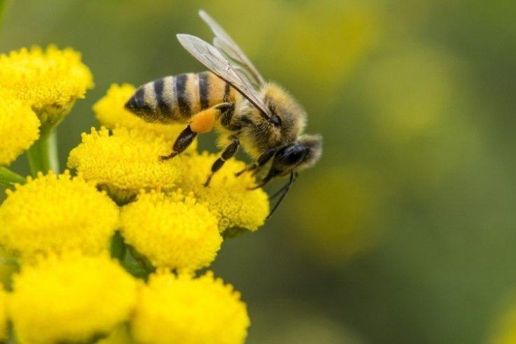 B Q bees data tag (1)