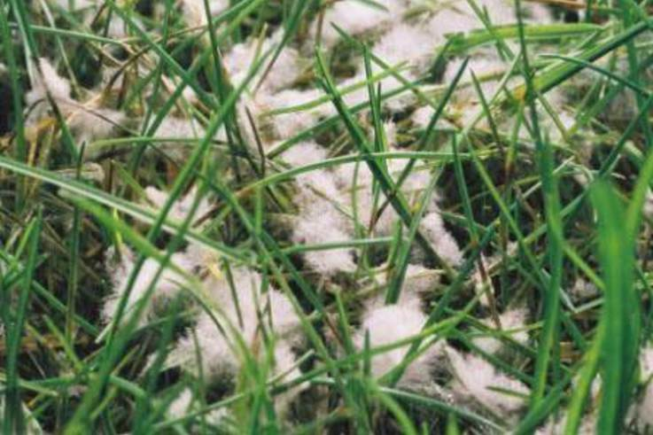 Clearing up the confusion of turf fungicides