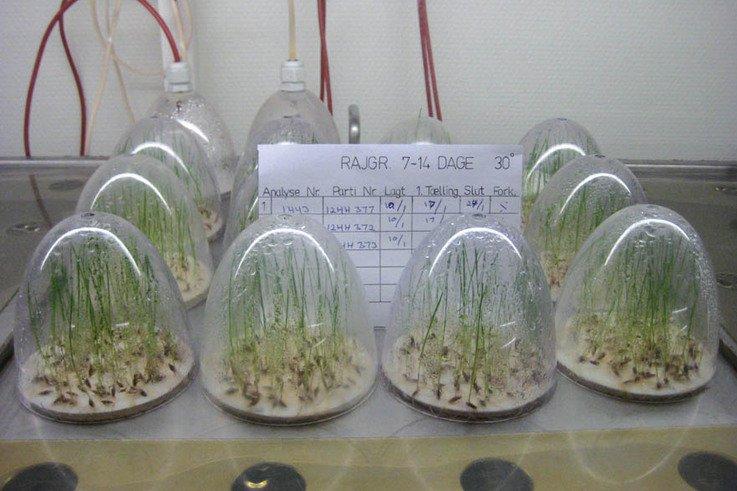 SeedTestingLaboratory