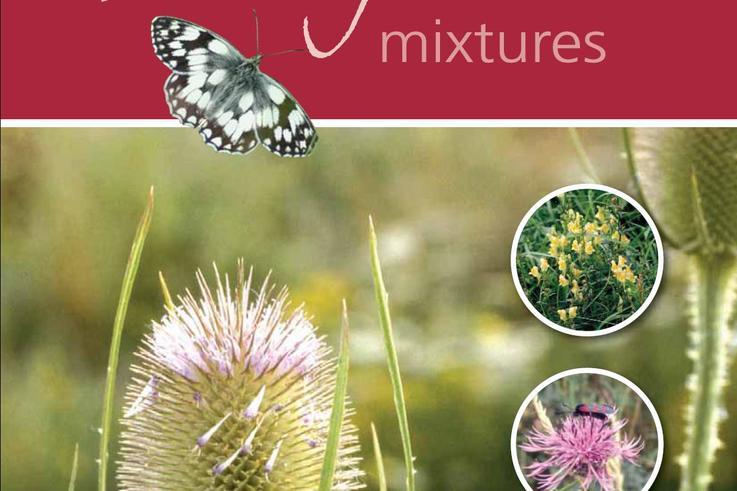 Wildflower brochure.jpg