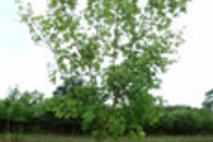 Clearance sale on Nursery Stock Trees