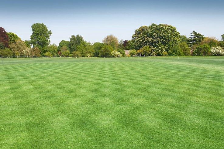 Limagrain_Cricket_pitch.jpg