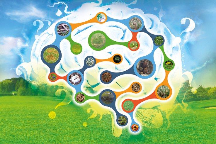 James-Grundy Brain-Montage