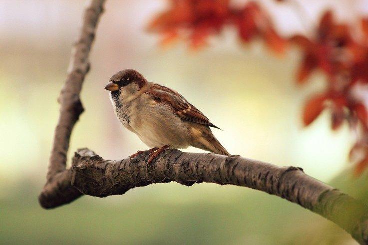 sparrow-9950_1280.jpg
