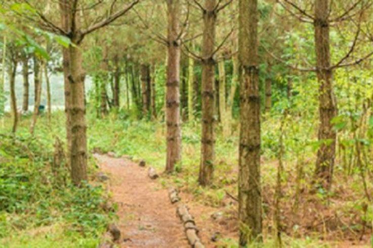 HS2 woodland fund