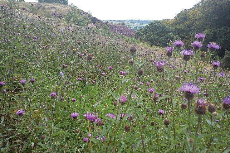 Turton Wildflowers2