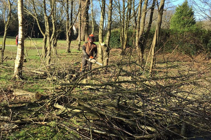 Tree-clearing-at-Chipstead-GC