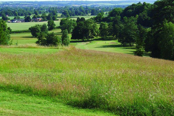 Lorne Temple fescue meadows