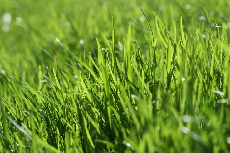 nature-grass-plant-field-lawn-meadow-746227-pxhere.com.jpg