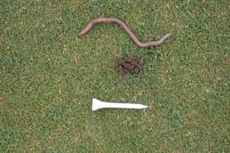 Managing Earthworm castings in Low-Cut Golf Course turf