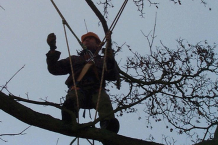 TreeSurgeon3.jpg [cropped]