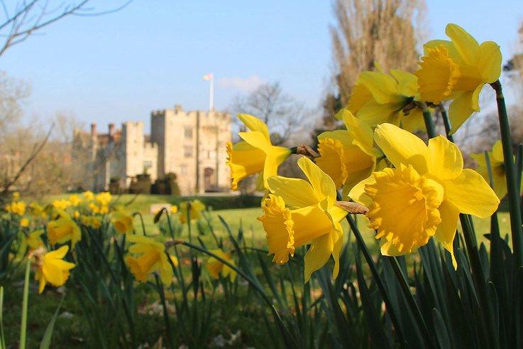 Daffodils_Hever-Castle.jpg