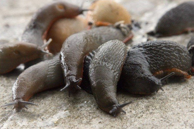 MonsterSlugs