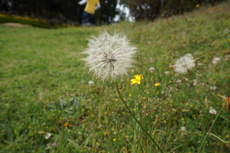 Weeds - Amenity Forum