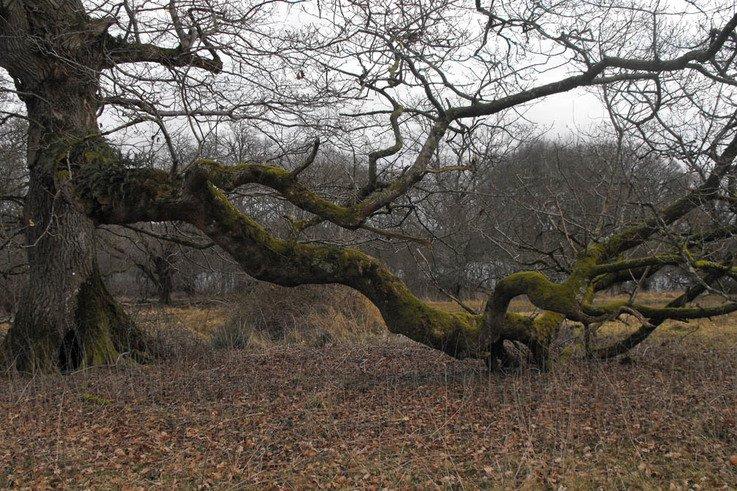 Trees SinkingBranch