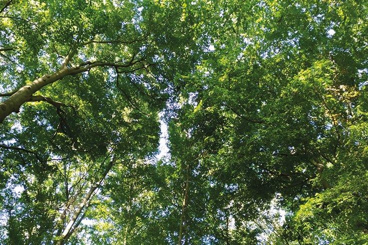 tree-canopy.jpg