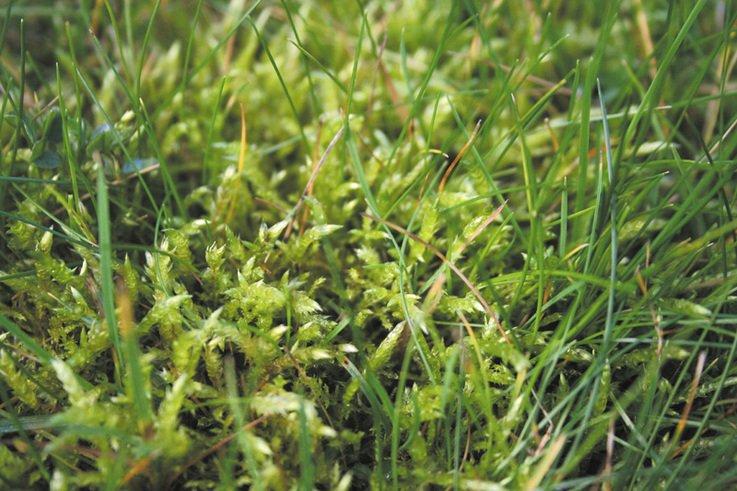 Managing Moss