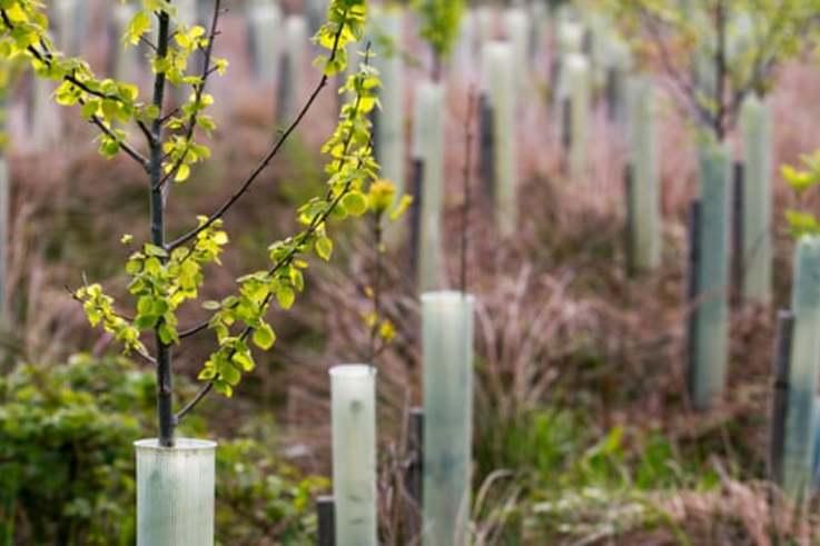 Tree Planting N UK