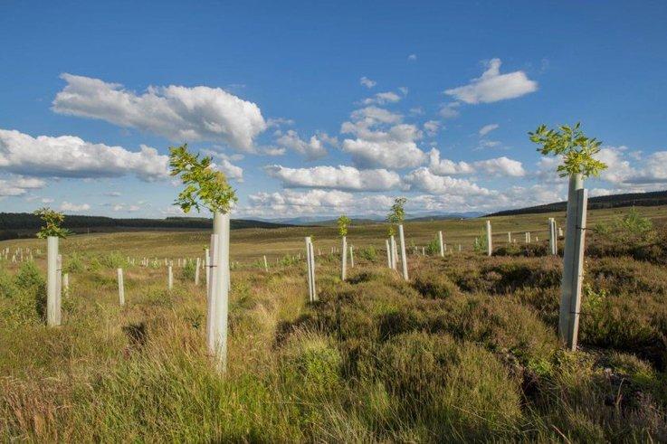 DEFRA-Trees.jpg