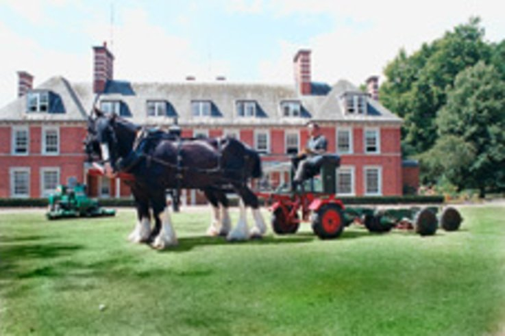 Working horses return to Hyde Park