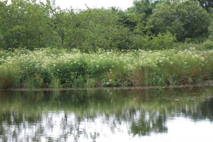HWD by lake