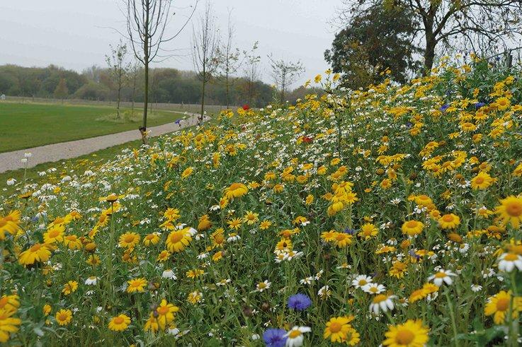 BarnhurstLaneNoel Wildflowers