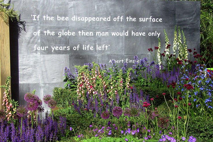 Pollinator friendly garden at Chelsea Flower Show May 2010 129
