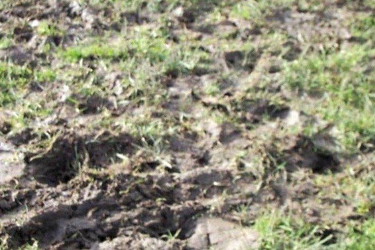 Mud1.jpg [cropped]