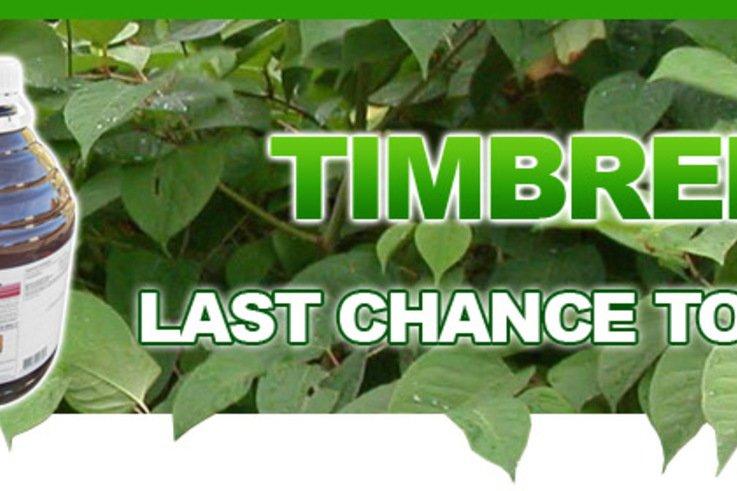 Timbrel Banner