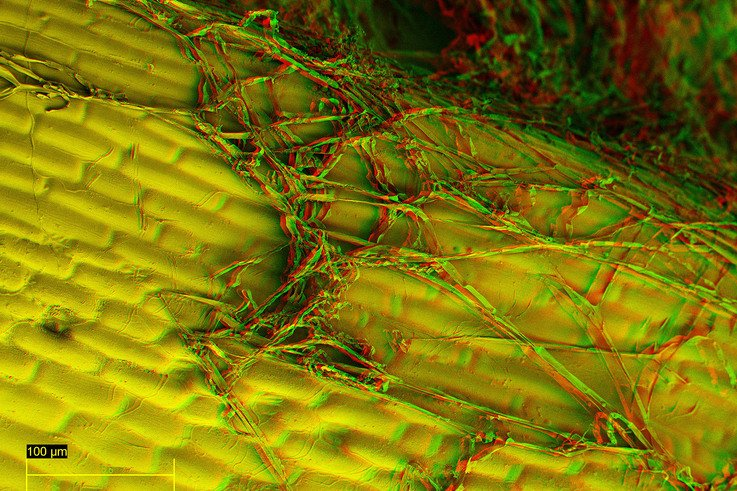 Mycelium control on the leaf surface 2 mr