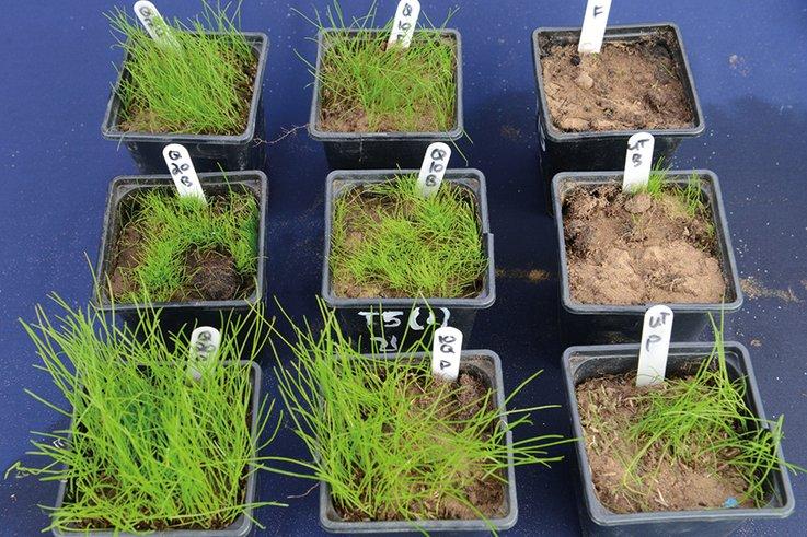 Syngenta Qualibra germination trial pots mr
