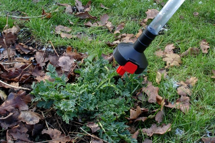 The Micron Weedstick in action on ragwort.JPG