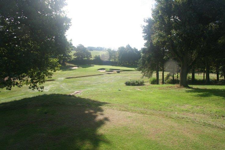 trees on golf