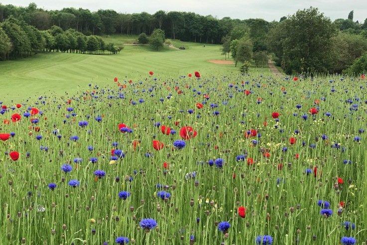 Gaudet Luce Wildflowers