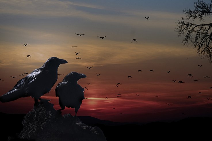 SunsetCrows