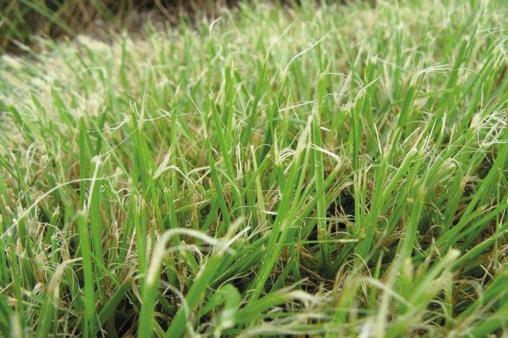 shredded grass leaves photo original