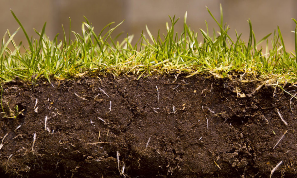 The life in your soil pitchcare for Is soil living