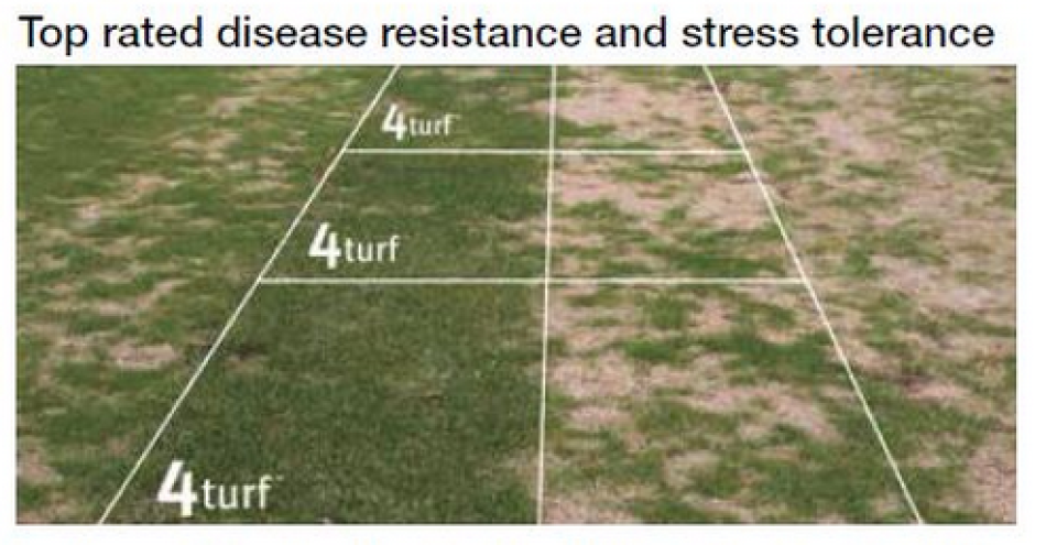 Johnsons 4TURF Disease Resistance