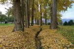 Certhia draining ditch at golf course trees autumn