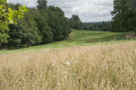 Thin rough aids golf course playability and attraction