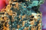 mycelium01 copy.jpg